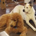 How Dogs Can Benefit From Daycare