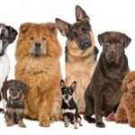 Types Of Breeds That Need Grooming The Most