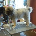 How Grooming Can Make Your Dog Happier