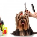 The Importance Of Professional Dog Grooming Before A Dog Show