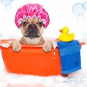 Tips For Grooming At Home To Help In Between Groomer Visits