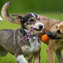 Why Playdates With Your Dog Are Important