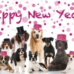 2016 New Year's Resolutions For You And Your Pet