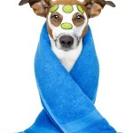 Keep Your Four-Legged Friends Skin From Getting Dry