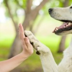 Keep Your Dog's Paws Safe