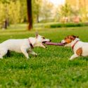 The Psychology Behind Why Dogs Love to Play With Other Dogs