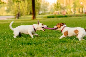The Psychology of Dogs Playing With Other Dogs