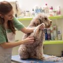 How Groomers Are Able to Keep Dogs Still