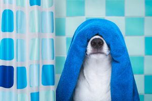Dog in a bath towel in the bathtub
