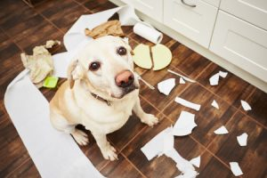 Dog makes mess in kitchen