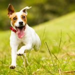 happy dog running and playing