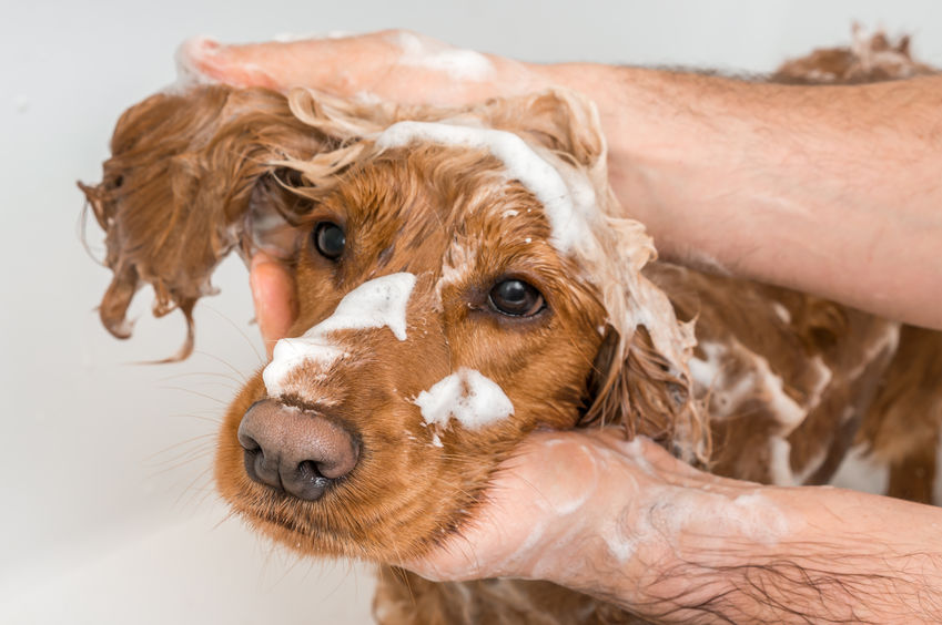 Pet grooming for health benefits