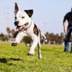 Dog parks benefit dogs