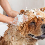 Bath time for your dog