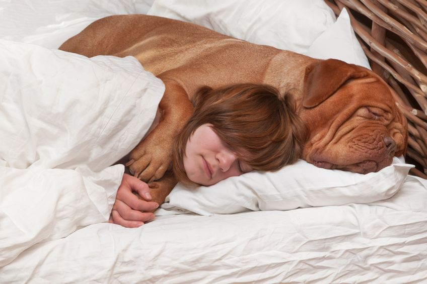 Allowing dog to share bed